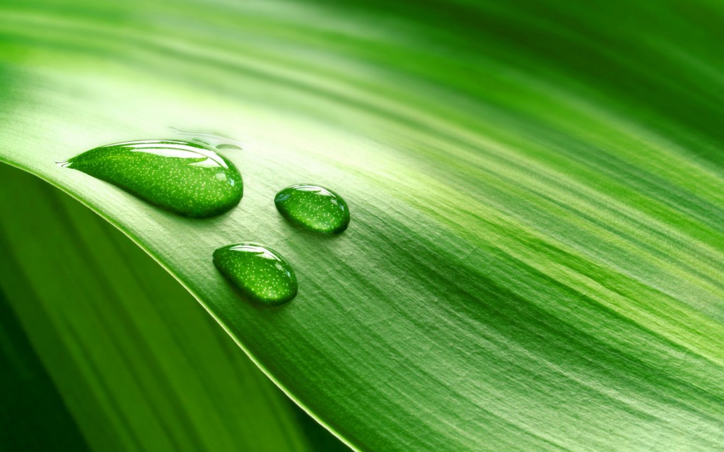 water_drop_on_green_leaf-1920x1200-1024x640